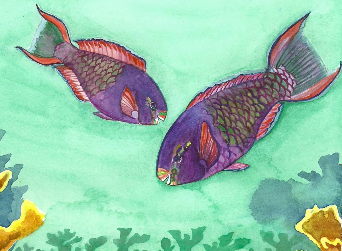 Swarthy Parrotfish Scarus niger