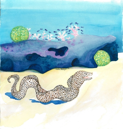 Spotted Moray Eel by Claudia Makeyev